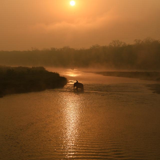 """""""Elephant crossing at sunrise"""" stock image"""