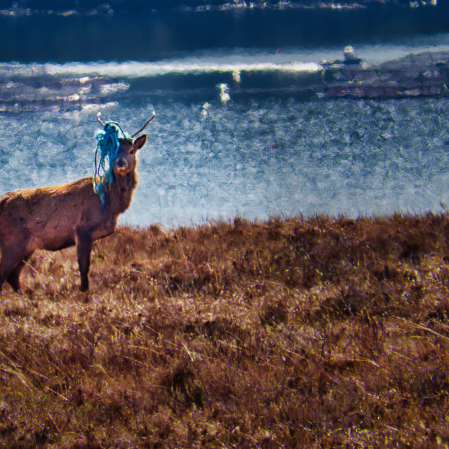 """""""Red Deer Stag Entangled"""" stock image"""