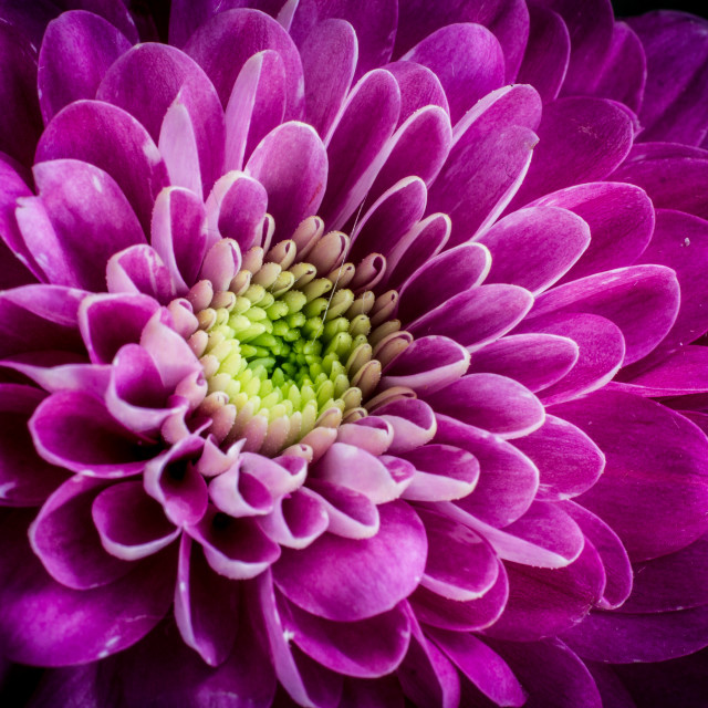 """Pink flower fullframe"" stock image"