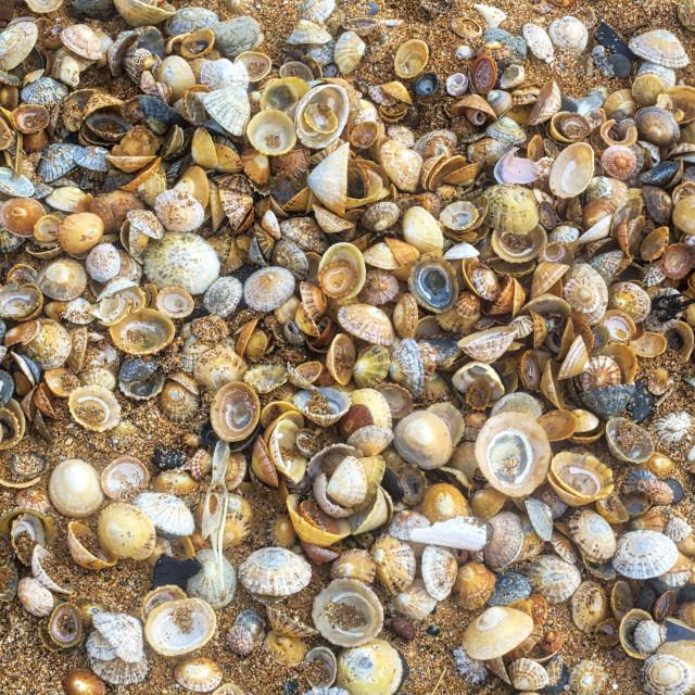 """""""Seashells."""" stock image"""