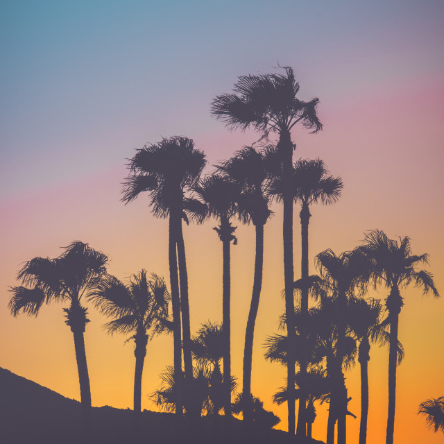 """""""Tropical Palm Trees At Sunset"""" stock image"""