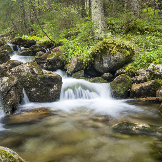 """Mountain stream with small cascades."" stock image"