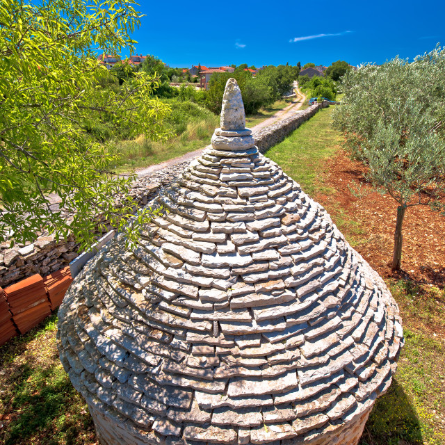 """""""Olive tree field and traditional Istrian Kazun stone hut view"""" stock image"""