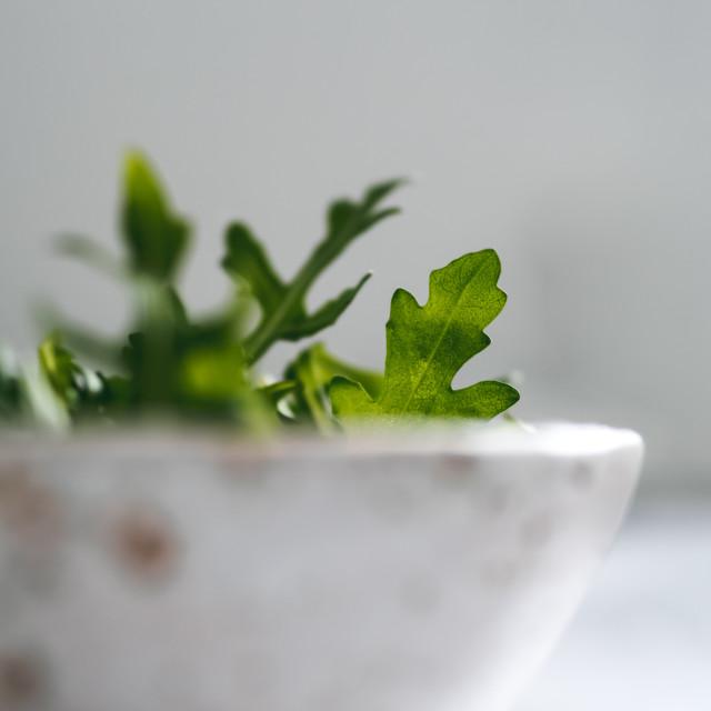 """Arugula leaves in craft ceramic boul, copy space"" stock image"