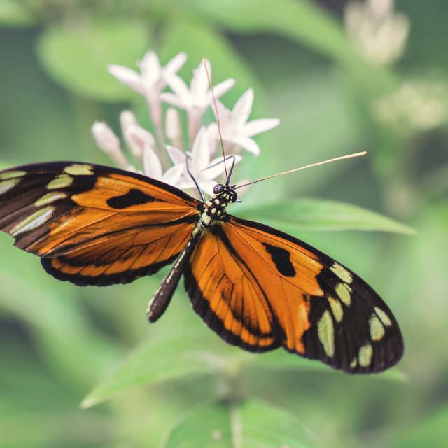 """macro butterfly"" stock image"