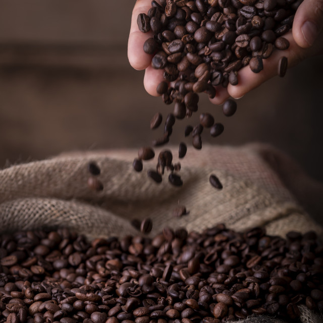 """""""Hands pouring coffee beans to sack"""" stock image"""