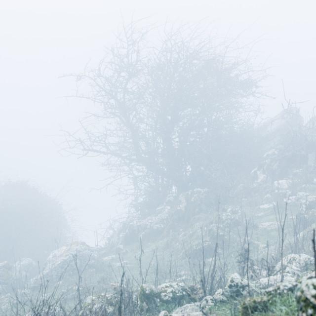 """Landscape of trees on hill slope in fog"" stock image"