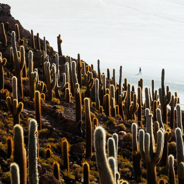 """Cactus island in the Bolivian salt flat of Uyuni"" stock image"