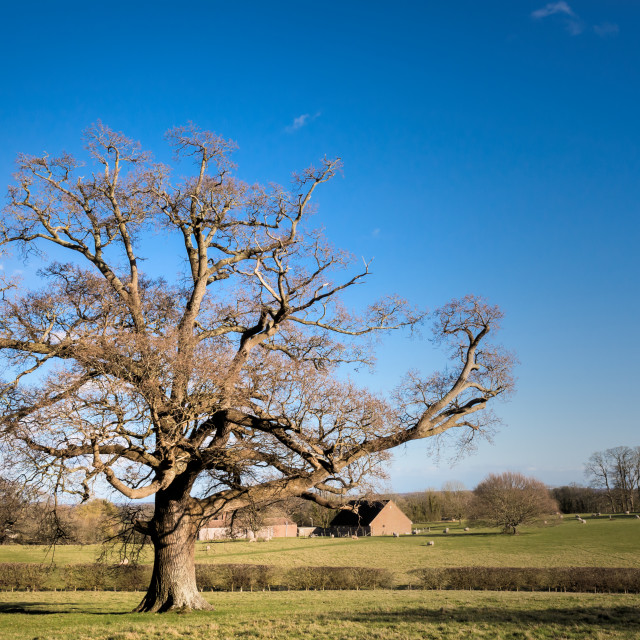"""Rural Kent"" stock image"