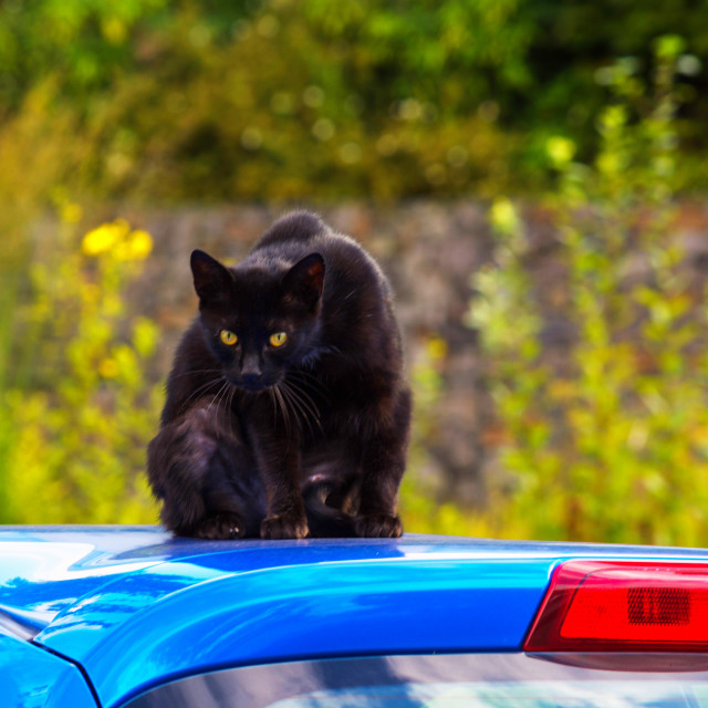 """Black cat on a car roof"" stock image"