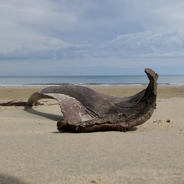 """Beach Art"" stock image"