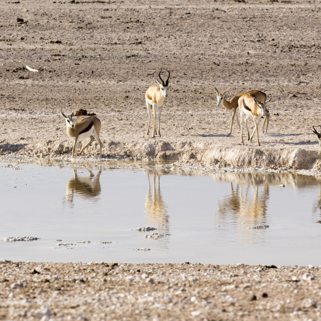 """Animals arriving at water hole in desert"" stock image"