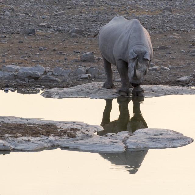 """white rhino in Namibia natural park"" stock image"