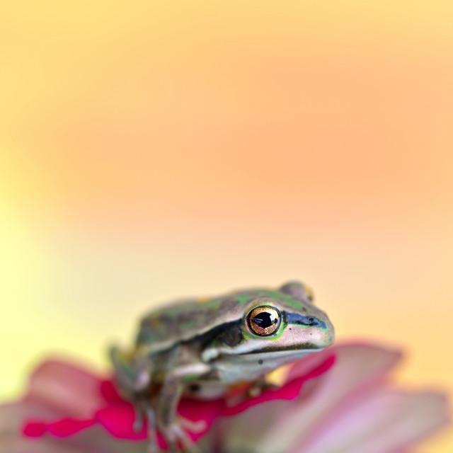 """baby frog"" stock image"