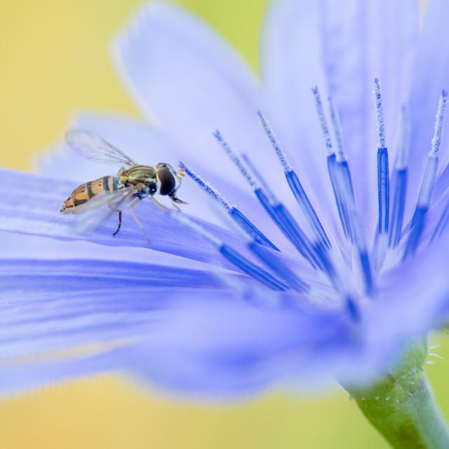 """Fly & Flower"" stock image"