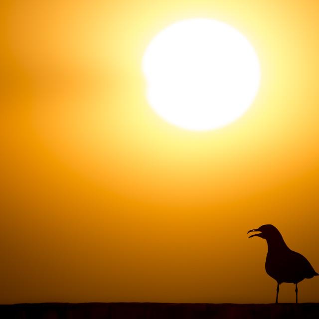 """Gull Silhouette"" stock image"