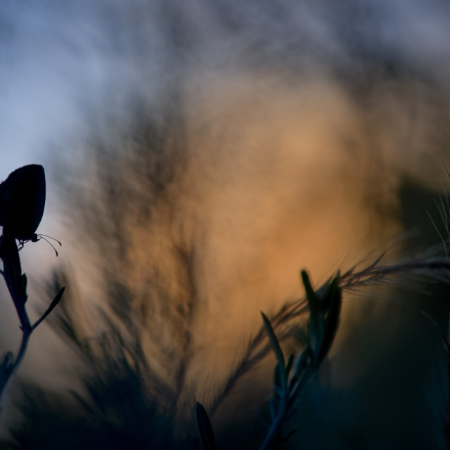 """""""Sunset Silhouette Butterfly"""" stock image"""