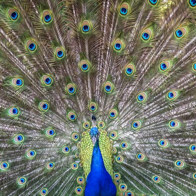 """""""Mardi Gras Bird"""" stock image"""