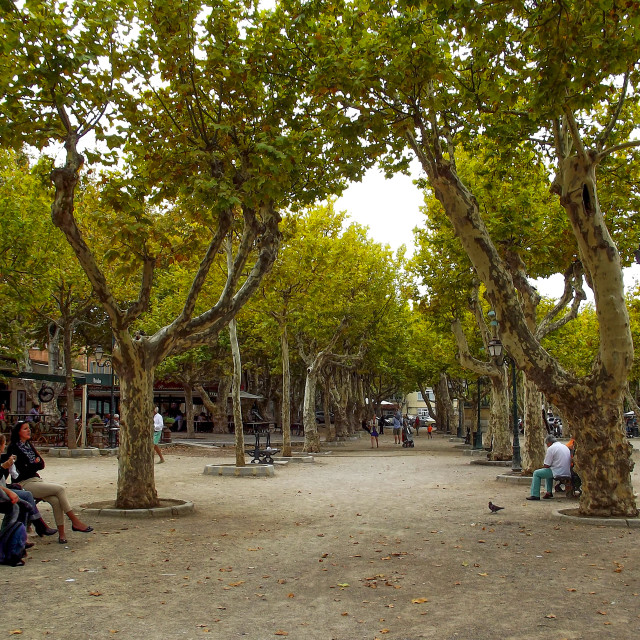 """Tree Lined Square in St Tropez"" stock image"