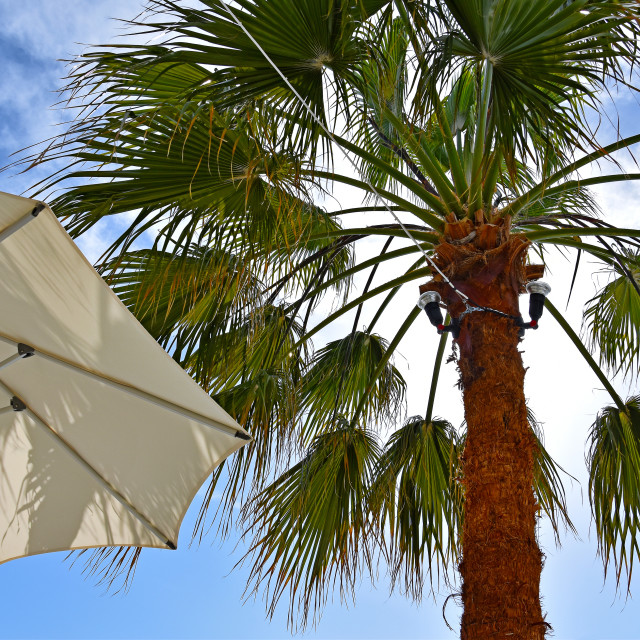 """Parasols next to palm trees in Santorini"" stock image"