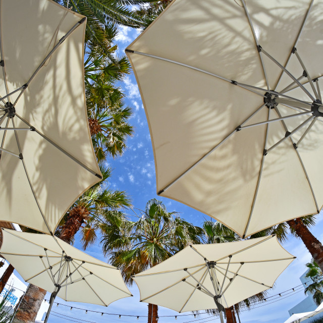 """Parasols and palm trees"" stock image"
