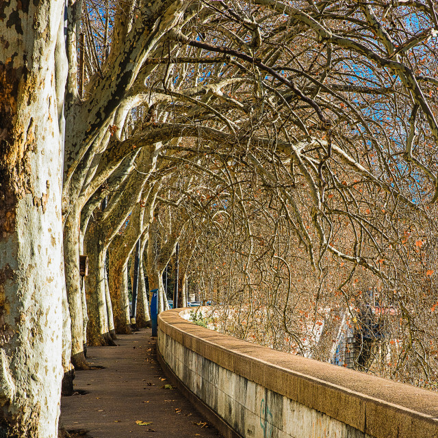 """lungotevere of Rome"" stock image"