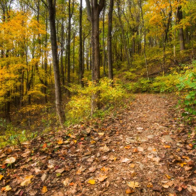 """""""Autumn Trail - Shenandoah"""" stock image"""