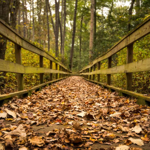 """""""Autumn Trail 2 - Shenandoah"""" stock image"""
