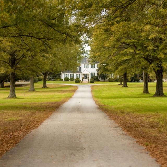 """Virginia Plantation - Suffolk"" stock image"