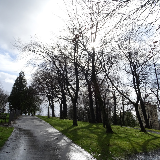 """""""Winter trees in the park after the rain"""" stock image"""