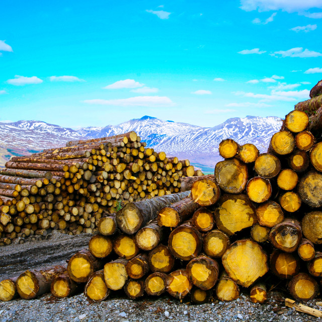 """""""Harvested Timber"""" stock image"""