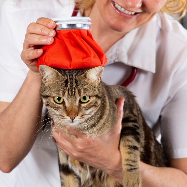 """Cat flu"" stock image"