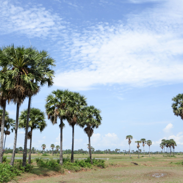 """Palm Trees on the Plains"" stock image"