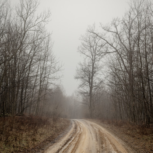 """Dirt Road in the Foggy Morning"" stock image"
