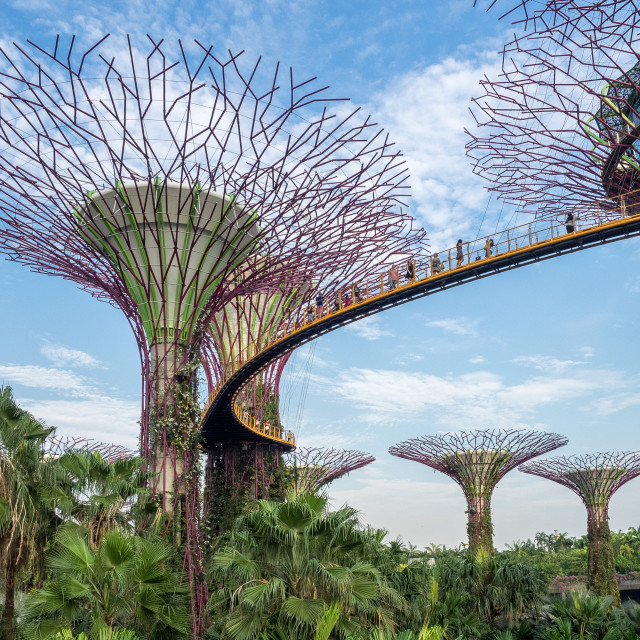 """Gardens by the Bay, Singapore"" stock image"