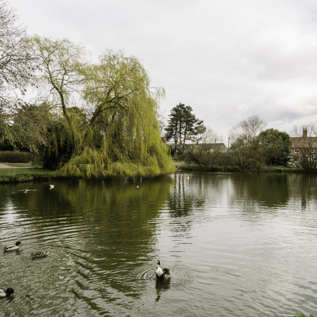 """Village pond"" stock image"