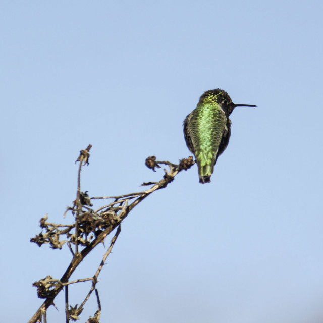 """hummingbird gently balanced on tree branch"" stock image"
