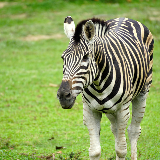 """Black and White Stripes"" stock image"
