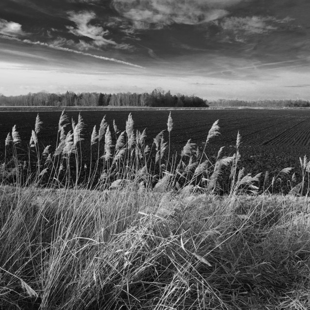 """""""Fields of black soil at Holme Fen, the lowest ground in Britain,..."""" stock image"""
