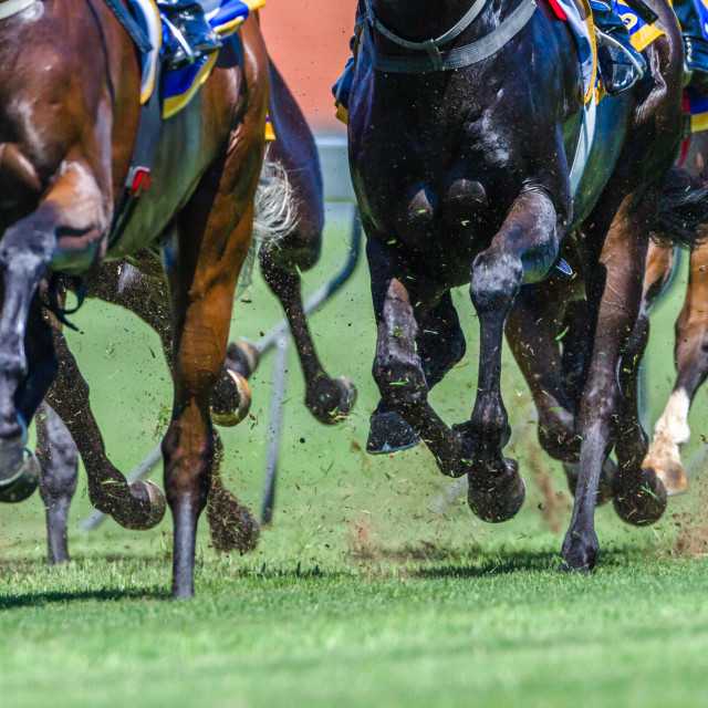 """Horse Racing Close-Up Hoofs Legs Grass"" stock image"