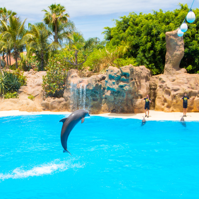 """""""Dolphin show in Loro Park on Tenerife"""" stock image"""