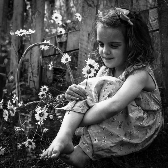 """daisies"" stock image"