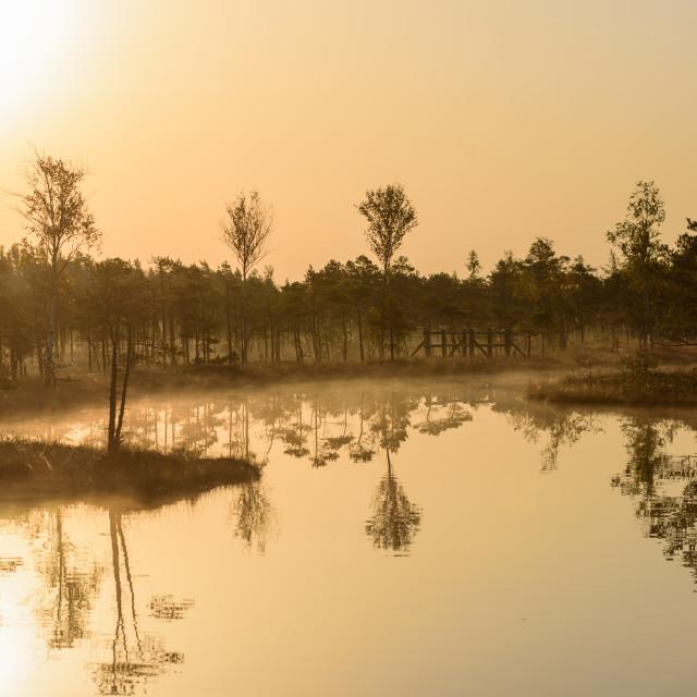 """Reflections on water. Beautiful idyllic morning light, during sunrise in bog boardwalk."" stock image"