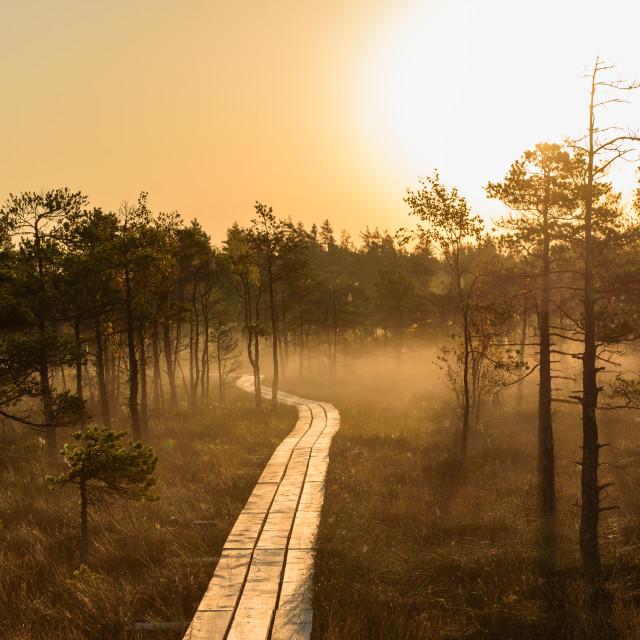 """Beautiful idyllic morning light, during sunrise in bog boardwalk."" stock image"