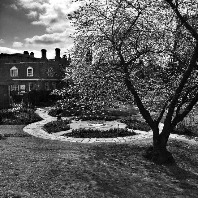"""""""Cherry blossom in the cathedral garden, Chester."""" stock image"""