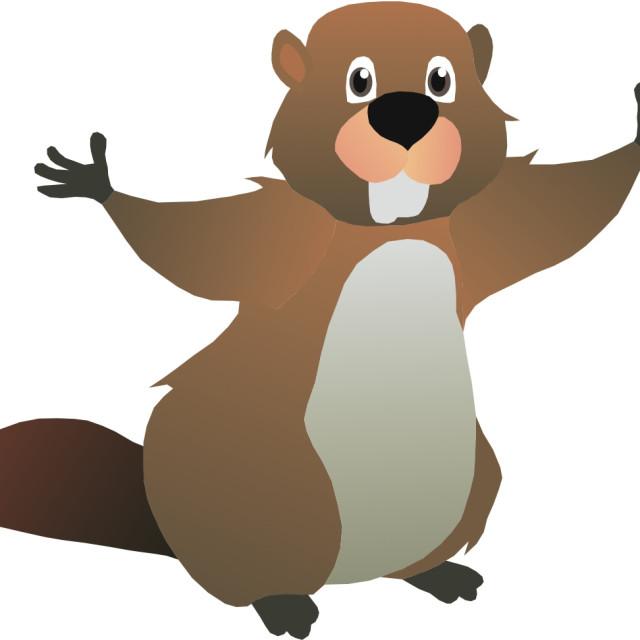 """Beaver Koolamooloo"" stock image"