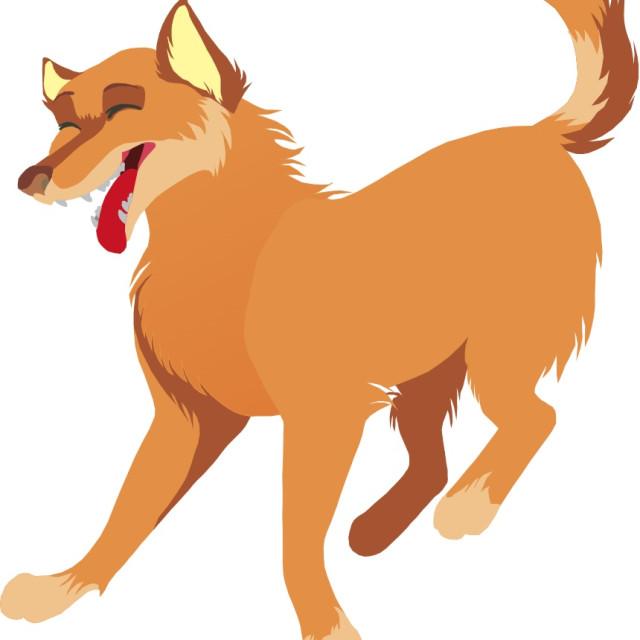 """""""Dingo Koolamooloo"""" stock image"""