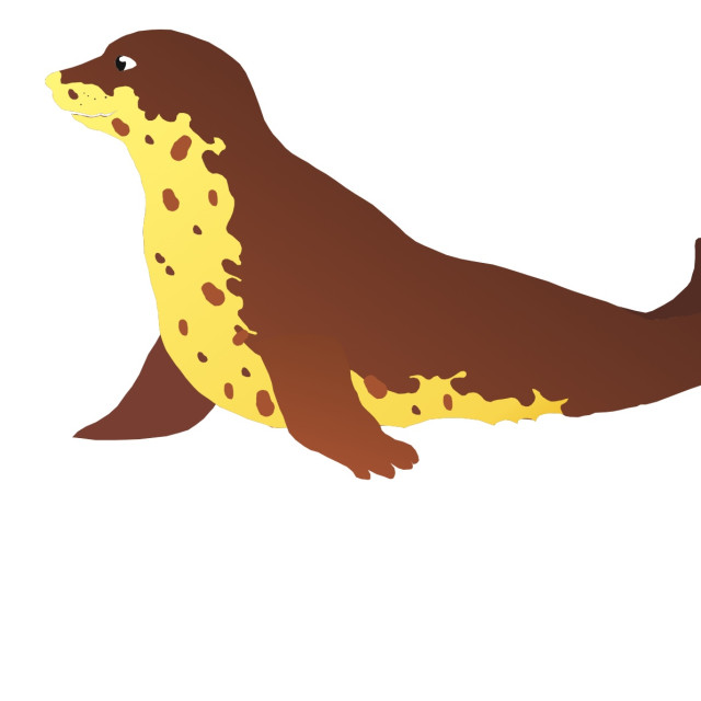 """Seal Koolamooloo"" stock image"