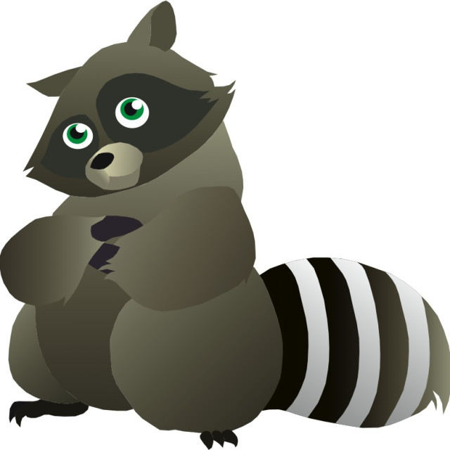 """Raccoon Koolamooloo"" stock image"