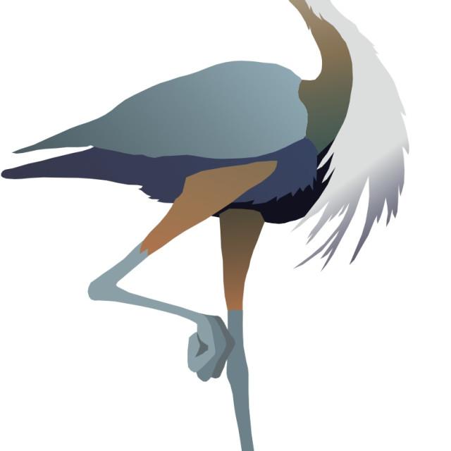 """Blue Heron Koolamooloo"" stock image"